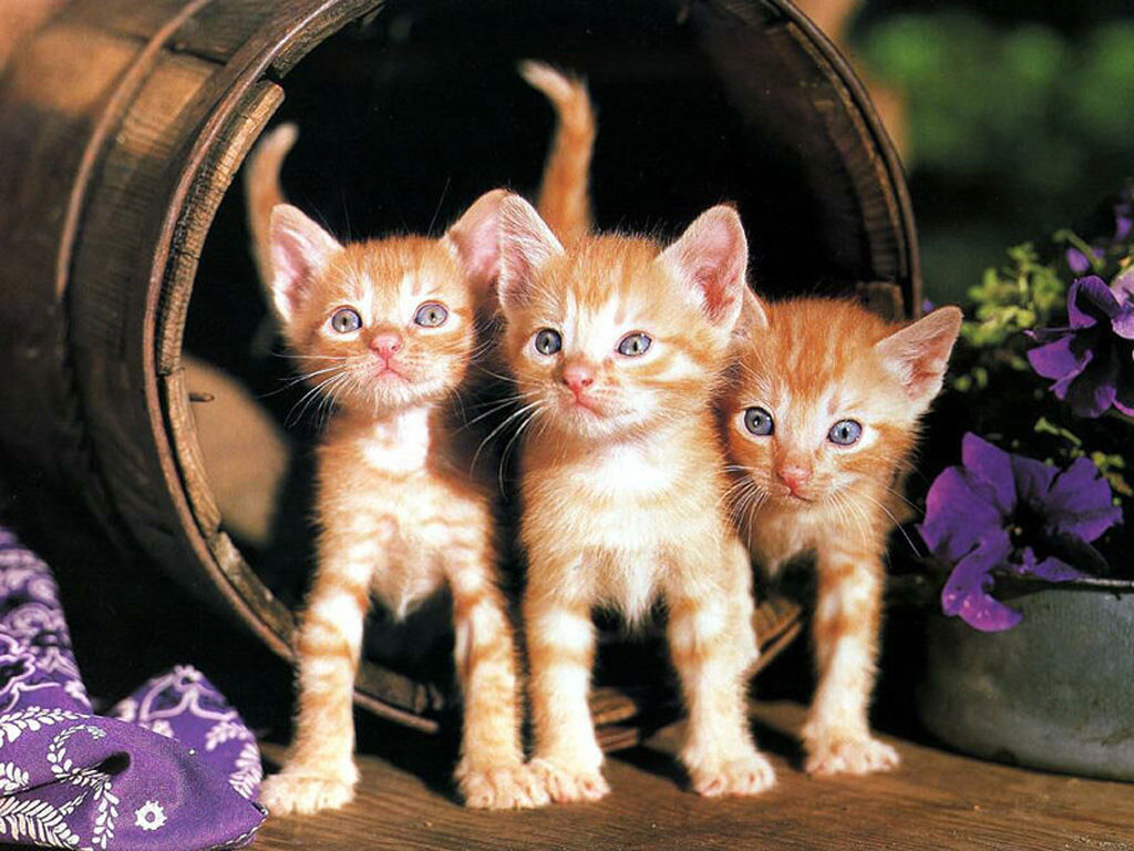 Милые котятки 21 фото юмор анекдоты